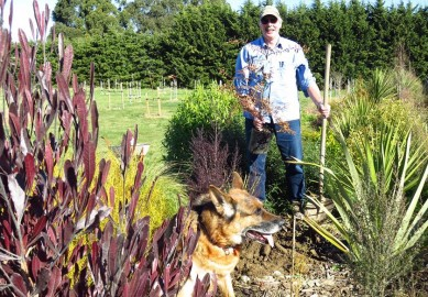 """John Knox and """"Mack"""" planting some Kauri at their place in Landsborough, Darfield."""